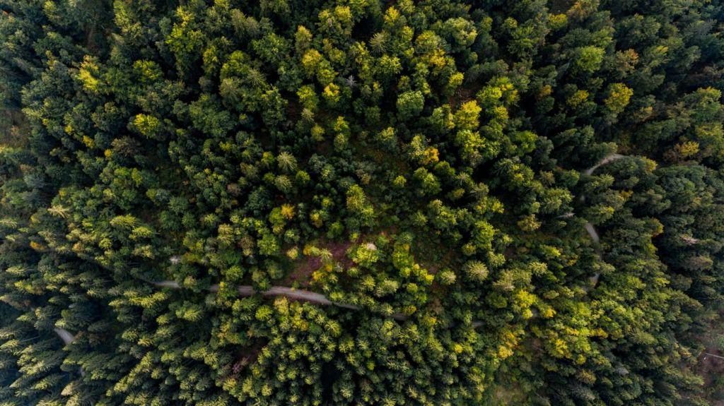 Bäume pflanzen und Flächen aufforsten (Quelle: hoepke.de/goesgreen)